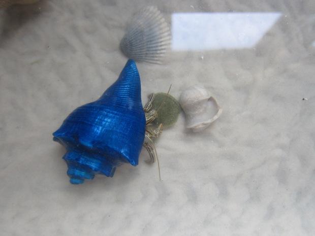 crab-035