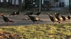 turkeygoround